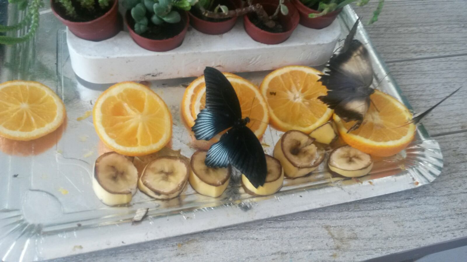 Z camp, day 4 - full-day excursion, butterflies eat fruit